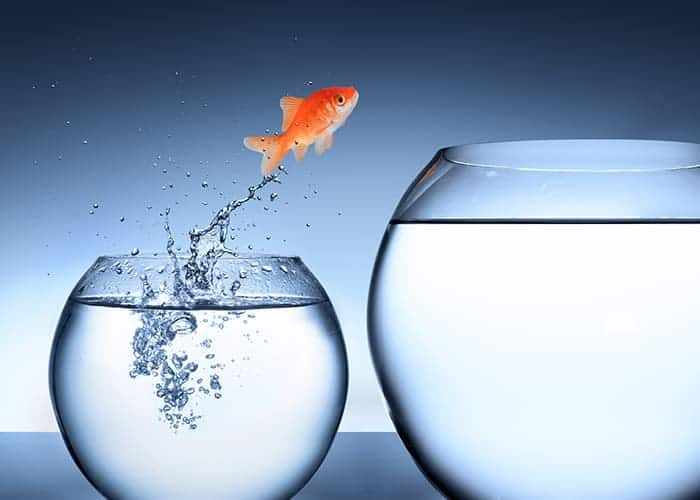 Goldfisch springt von kleinem ins große Glas